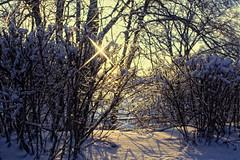 Золотые мои россыпи (hobbybox) Tags: зима canoneos30d настроение пейзажи архангельское canoneffd20mmf28