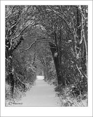 2010 12 20_3590 (Anne_mie) Tags: sneeuw nederland landschap geleen zuidlimburg
