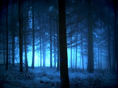 BlueRoom (BphotoR) Tags: blue mist snow misty fog backlight forest germany deutschland nebel hessen room foggy wald bume gegenlicht odenwald naturesfinest neblig supershot g10 yourblueroom abigfave juhhe anawesomeshot impressedbeauty bphotor blinkagain bestofblinkwinner