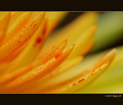 ... red dots (nigel_xf) Tags: red rot yellow nikon gelb nigel d300 nikond300 nigelxf mygearandmepremium