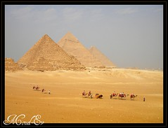Along the Desert (ArtfulPIX) Tags: yellow desert egypt pyramids camels moudev