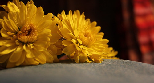 January Macro - Yellow Fleurs