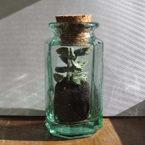 Black Thumb Terrarium- succulent no. 2
