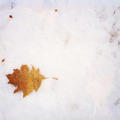 lingering fall