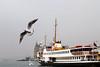 Kadıköy Klasiği :) (tugcekancali) Tags: sea sky cloud turkey ship seagull türkiye istanbul deniz vapur bulut gökyüzü kadıköy martı turkei haydarpaşagarı eos500d khalkedon