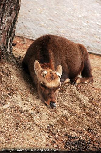 Nara 奈良 - Nara Deer
