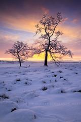 Bare naked trees. (Stuart Stevenson) Tags: trees winter light sky snow cold field sunrise scotland frost earlymorning freezing wideangle colourful winterlight barenaked clydevalley canon1740mm thanksforviewing canon5dmkii stuartstevenson