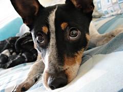Puppy dog eyes (LisaKurr) Tags:
