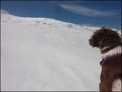 dh - Iris de la Loupette découvre le ski alpin