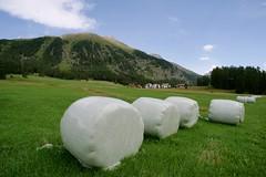 let's pl'hay ball (Riex) Tags: field champ hay foin grass herbe pontresina puntraschigna grisons graubünden engadine switzerland suisse graubunden schweiz svizzera a900 minolta amount minoltaamount 20mm af