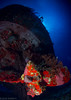 Felipe Xicotencatl (jcl8888) Tags: scuba diving shipwreck wreck nauticam nikon d7200 tokina 1017mm cozumel mexico vacation travel adventure marine life underwater water saltwater ocean sea blue red coral bubbles navy wwii minesweeper