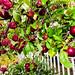 Black Amish apple tree