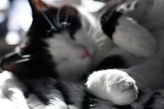 Felix (Kathleen Fraser Photography) Tags: pet macro cute up animal cat close felix