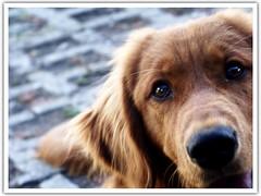 PeKliko (Luis Fernando Muñoz) Tags: dog kodak perros animales ternura flickrgt