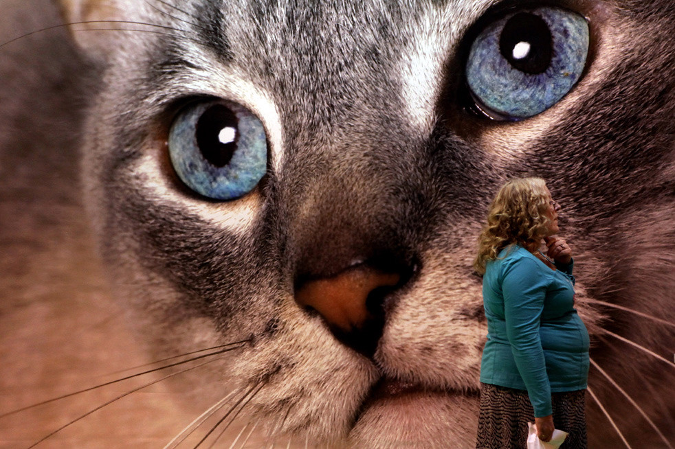 30 Выставка кошек в Англии