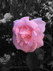 Puk (Global Delight) Tags: selectivecoloring photodelightforipad