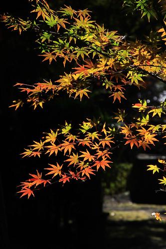 2010年12月4日 格本山覚園寺