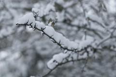 _DSC6563 (Europa Photography) Tags: winter england snow weather europe chaos westsussex unitedkingdom photojournalism location freeze environment southeast bognorregis stockcategories