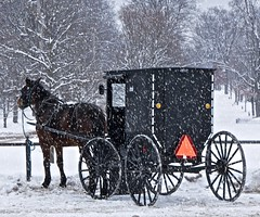 Amish Buggy in Snow (Don Iannone) Tags: winter snow snowyday winterscene amishcountry northeastohio geaugacountyohio middlefieldohio greatercleveland mesopotamiaohio amishhorseandbuggy doniannonephotography