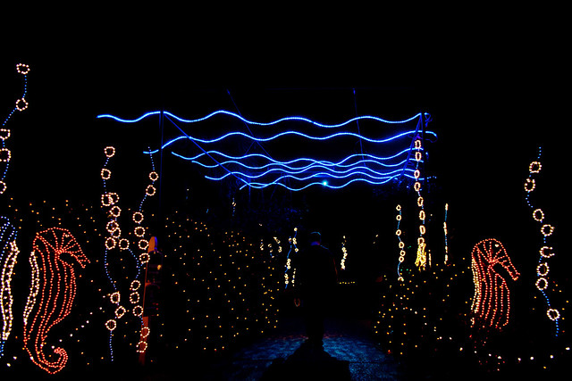 Bellingrath Gardens Christmas lights 9