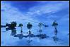 Reflections 2 (peakdot) Tags: landscape pcc imag 1116 pipho pinoykodakero ycap garbongbisaya