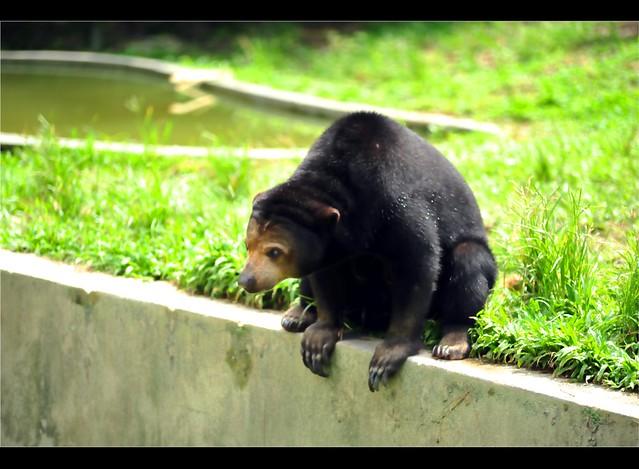Zoo Taiping 17