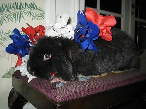 patriotic bunney