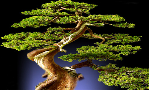 """Bonsai 080 • <a style=""""font-size:0.8em;"""" href=""""http://www.flickr.com/photos/30735181@N00/5261935258/"""" target=""""_blank"""">View on Flickr</a>"""
