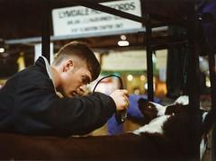 Farmboy 1 (John Elmslie) Tags: haircut toronto men cow candid fade royalwinterfair taper clippers