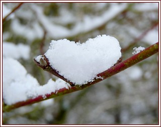 Coeur de Neige....
