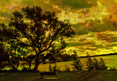Tree at Dusk (Rusty Russ) Tags: life sunset people usa lake color tree water composite clouds forest photoshop magazine t ma creativity yahoo blog google pond flickr all image artistic dusk earth creative young photographers commons manipulation blogs national montage saturation getty newsroom universe paysage hue flic winners geographic bing wiki facebook woburn wikimedia openuniversity stumbleupon daum skiy worldskills ilri reddit twitter photoscape flickriver pixelpeeper fiveprime flickrhivemind pinterest alpilo oceannetworks comflight