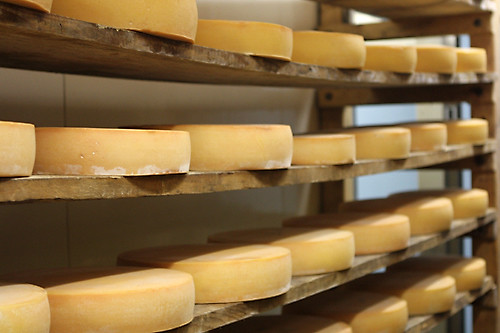 cheese ripening thesis