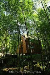 3_MG_1080-Bamboo Cottage, Sitou Nature Education Area, Chitou, Nantou County, Taiwan -------- (HarryTaiwan) Tags: taiwan bamboo       nantou                   harryhuang  hgf78354ms35hinetnet