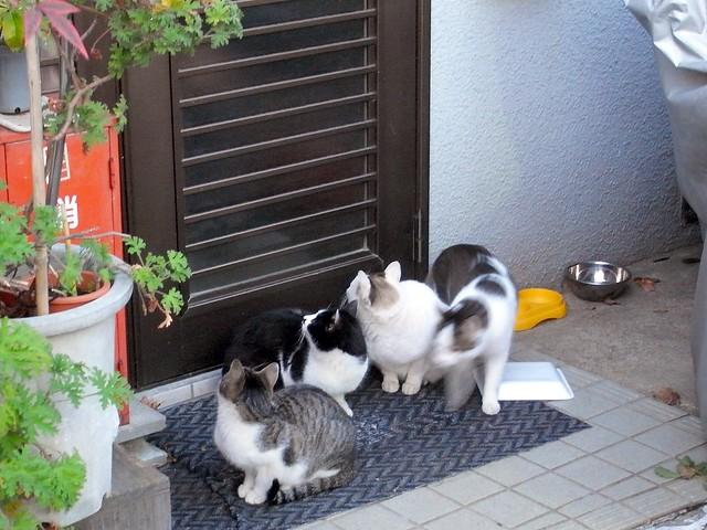 Today's Cat@2010-12-25