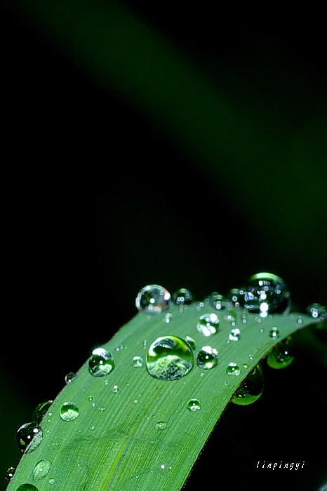 下雨天拍雨滴