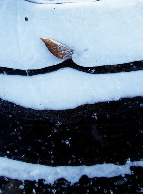 birch leaf in ice
