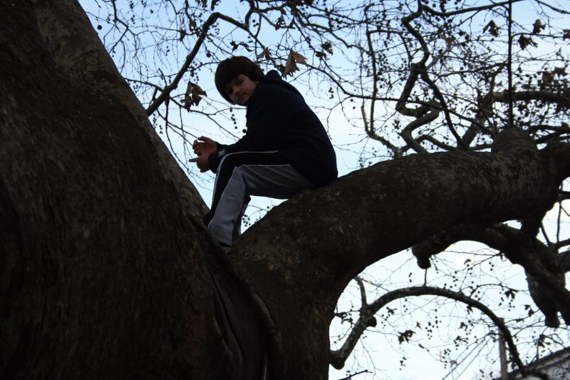 kid on a tree