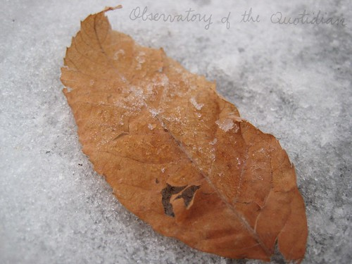 Red Snowy Leaf