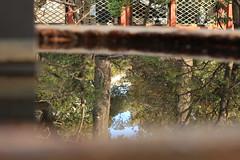 根津神社 水反射