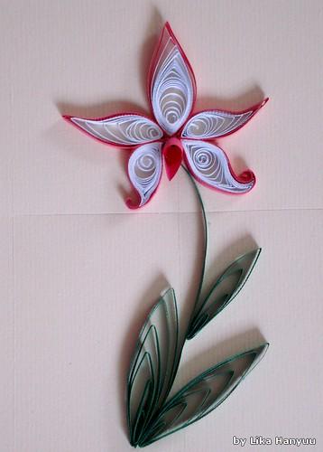 Orquidea