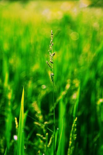 フリー写真素材, 花・植物, 植物(その他), グリーン,