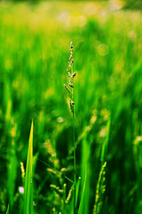 [フリー画像] 花・植物, 植物(その他), グリーン, 201101080700