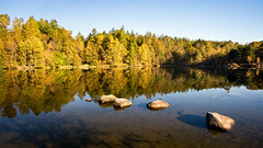 autumn colors (Dennis_F) Tags: lake colors district tarn hows dennisf