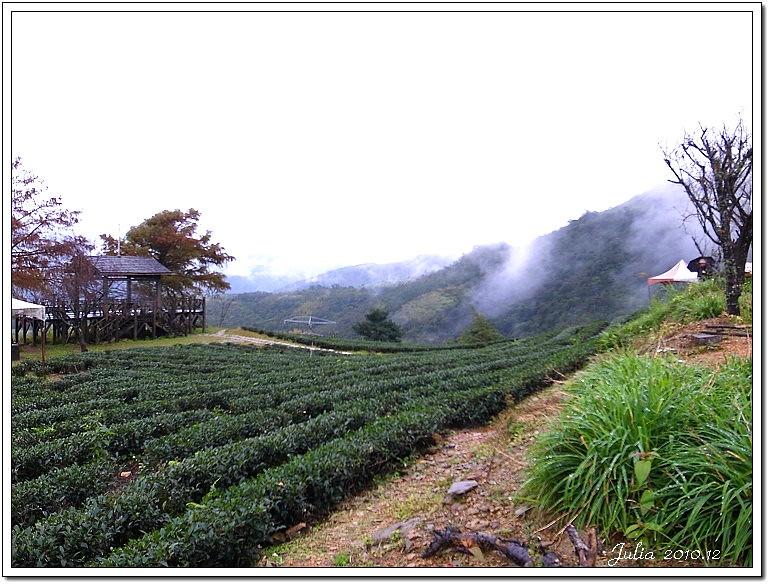 玉蘭茶園 (17)
