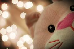 January 07 007/365 (Kim_Reimer) Tags: pink stuffedtoy canada cat toy bc fuzzy bokeh britishcolumbia canadian stuffedanimal photoaday plushie northamerica stuffy babytoy project365