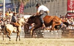 El tostao volador (Eduardo Amorim) Tags: horses horse southamerica caballo uruguay cheval caballos cavalos prado montevideo pferde cavalli cavallo cavalo gauchos pferd hest hevonen chevaux gaucho  amricadosul montevidu hst uruguai gacho  amriquedusud  gachos  sudamrica suramrica amricadelsur  sdamerika jineteada   americadelsud gineteada  americameridionale semanacriolla semanacriolladelprado eduardoamorim iayayam yamaiay semanacriolladelprado2010