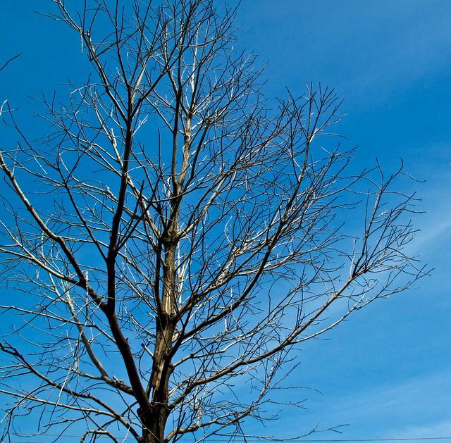IMG_1963 枯树, Dead tree