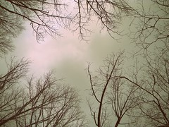 Born to Gaze Into Night Skies (BoomBoxBecc2) Tags: trees winter sky mountain lake snow ice leaves clouds island frozen woods path branches newengland treetops trail snowing wintersky offroading eastcoast snowytrees blackice snowybranches snowcoveredbranches fozenlake