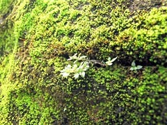 Mossy wall (Mangiwau) Tags: green festival wall indonesia java moss blood eid goat goats jakarta gore cutting lamb lambs throat mossy kambing bogor slaughterhouse sacrifice slaughtering adha sacrificial potong idul dipotong