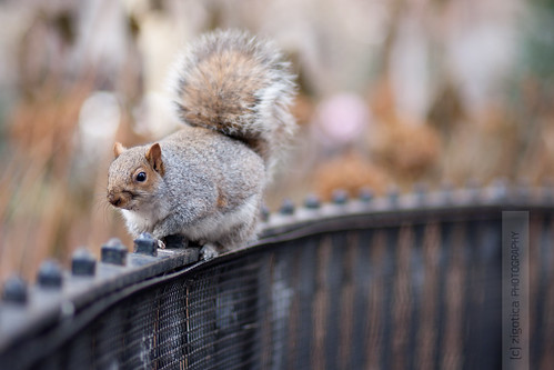 Squirrels Acrobatic